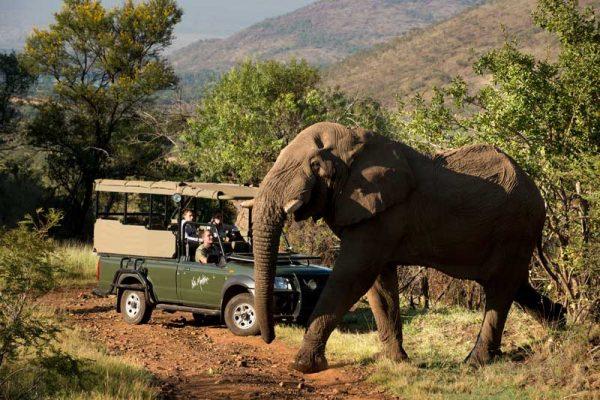 Kwa-Maritane-Elephant-Game-Drive-web